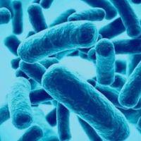 Los probióticos, ¿tienen el mismo efecto que el placebo en la gastroenteritis aguda?