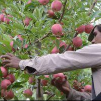 La producción de frutas y verduras solo alcanza para la mitad de los argentinos