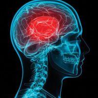 Estudian la función de neuronas implicadas en la memoria, para combatir la obesidad