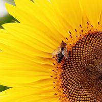 La biodiversidad crucial para nuestra alimentación y agricultura desaparece día a día