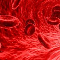 La dieta alta en grasas causaría aterosclerosis hasta el nivel celular