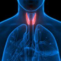 Investigadores asocian la resistencia a las hormonas tiroideas con la obesidad y la diabetes