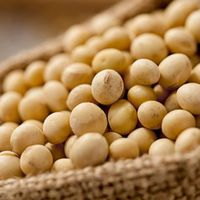 Algunos mitos sobre la soja que deberíamos olvidar