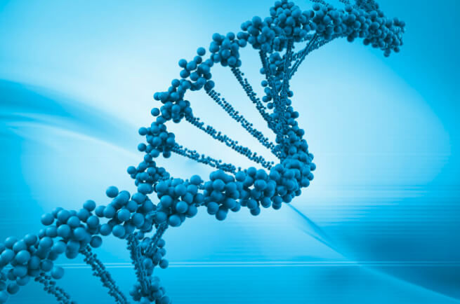 Relacionan los niveles de 'activación' o 'silencio' de los genes con la obesidad