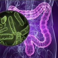 ¿Cuál es el impacto del microbioma en la salud y enfermedad del ser humano?