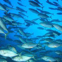 El cambio climático aumenta la exposición humana al mercurio del pescado