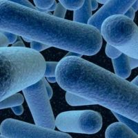 En España confirman 150 casos de listeriosis