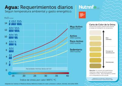 Infografía. Agua: Requerimientos diarios