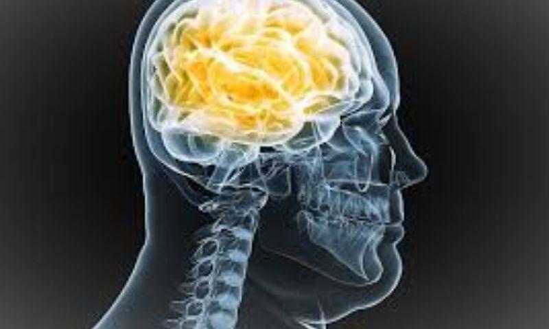 Las dietas ricas en grasas también afectan al cerebro