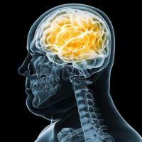Estudio indaga la relación entre actividad cerebral y obesidad