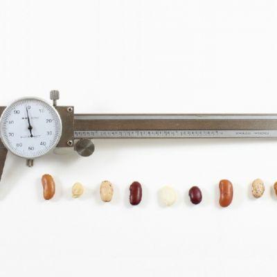 Técnica Antropométrica y Composición Corporal en la Consulta Dietético-Nutricional