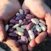 La FAO resaltó el papel crucial de las legumbres para combatir el hambre y lograr una alimentación saludable