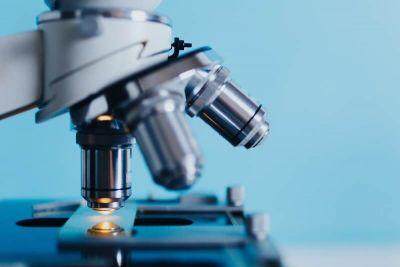 Habrían identificado una bacteria que podría disminuir la toxicidad del gluten