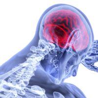 El envejecimiento del cerebro podría revertirse con una dieta baja en carbohidratos
