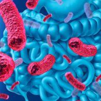 Las bacterias intestinales, ayuda inesperada contra el cáncer