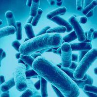 ¿Probióticos para la obesidad? Beneficios dudosos, riesgos posibles