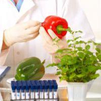 Los novedosos alimentos cultivados en laboratorio que podrían ser parte de nuestra dieta en el futuro