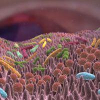 Científicos identifican microorganismos que podrían estar detrás del origen de la obesidad