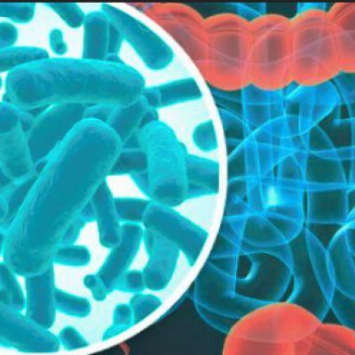 Fibra modula abundancia de bacterias intestinales
