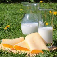 La leche y los productos lácteos, no relacionados con la obesidad infantil