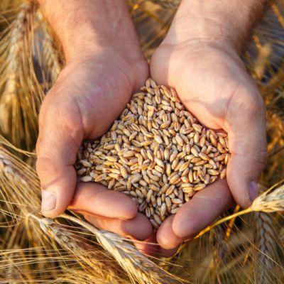 Nutrición y Desarrollo Rural Sostenible