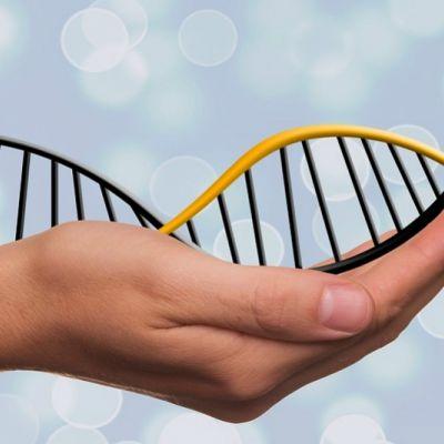 Actualización en Nutrigenómica, Nutracéuticos y A.Funcionales